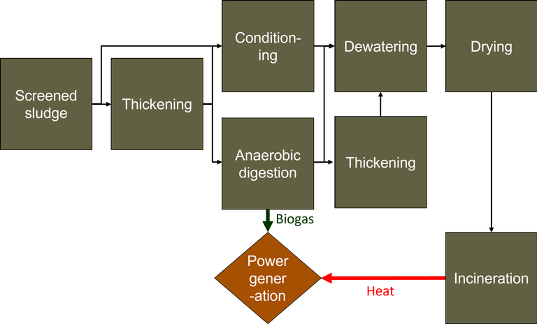 Flow diagram of sludge processing operations, from screened sludge to final disposal or incineration