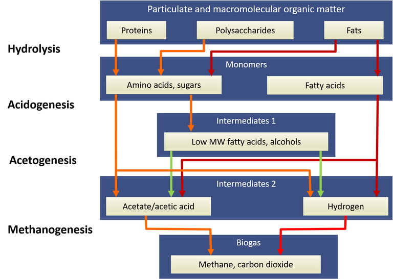 Biochemical pathways for converting organic matter to biogas products by anaerobic degestion